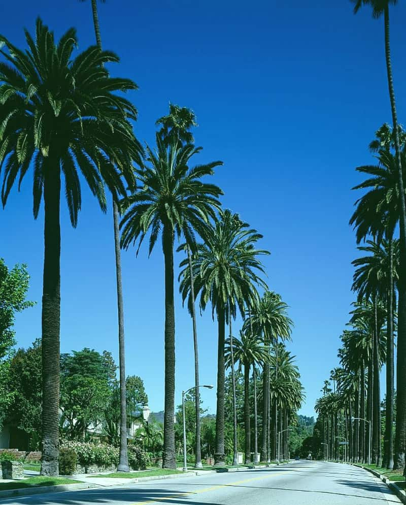 Beautiful Beverly Hills