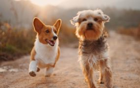 How Nutrition Can Improve Your Dog's Health #nutrition #dog food