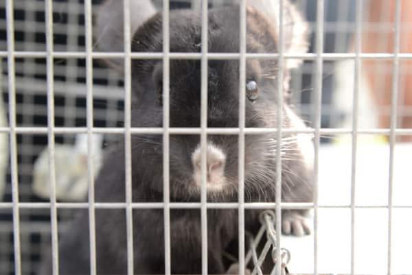 PETA Saves Chinchillas! #AdoptOneToday